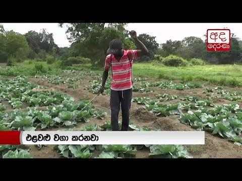 vegetable farmers in|eng