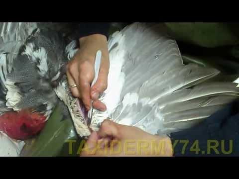 Видеоурок Птицы - видео