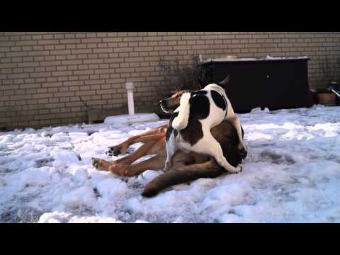 Lilly & Anton In hot´n´sexy Winterday (dogporn) video