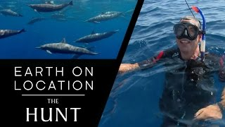 Dolphin Pod Makes Amazing Sounds! - The Hunt - #EarthOnLocation Vlog - BBC Earth Unplugged