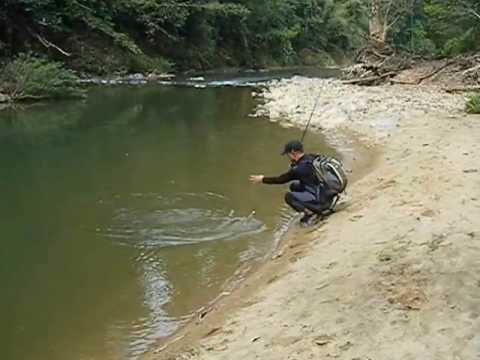 Thai Mahseer lure fishitng Khao Sok National Park 태국 타이머시어 루어낚시