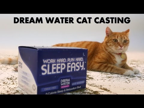YouTube s First Ever Cat Casting (PRANK VIDEO)