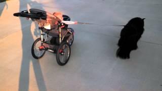 El bebé que saca a pasear al perro... o es al revés