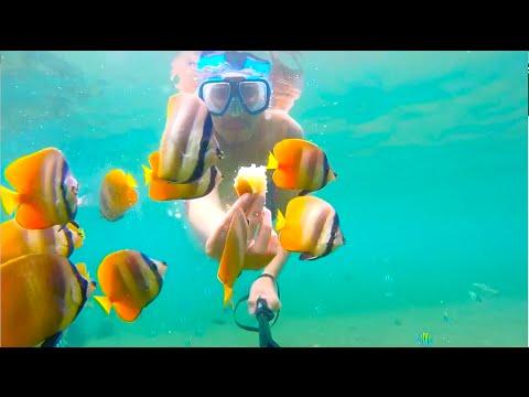 GoPro Philippines - DAUIN MARINE SANCTUARY