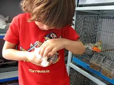 Aviario  Manel      canaricultura.multiforos.es