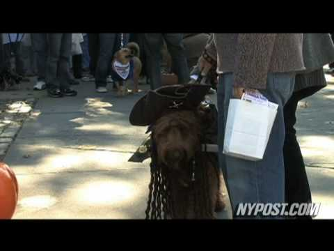 Dogs Dress the Part at Halloween Parade - New York Post