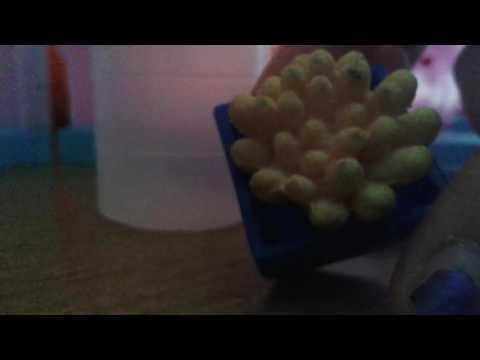 Как рожает лизун