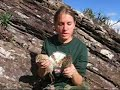 Arapuca Bird Trap