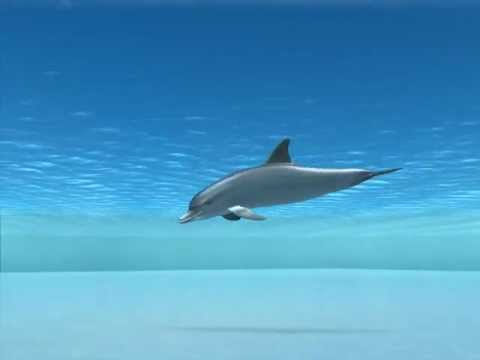 Animated Dolphins Images Dolphin Animation Demo / pm
