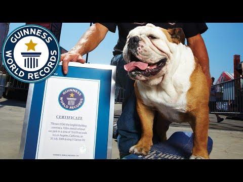 世界最速のスケボー犬のティルマン君逝く。ギネス認定時の映像