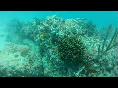 Army Tank Dive Miami Scuba Diving HD