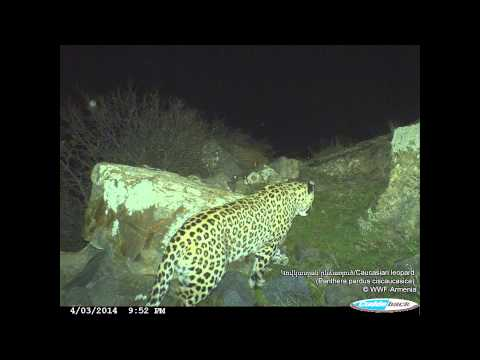 WWF-Armenia Camera Trap Photos (2013-2014)