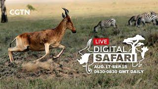 LIVE Digital Safari - Episode 4 - August 20th, 2020 - part 2