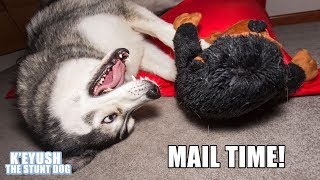Husky Gets A Monkey And More | Mail Time