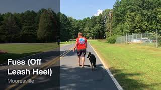 Havok GSD Puppy After Two Week Board and Train Off Leash Charlotte German Shepherd Trainers