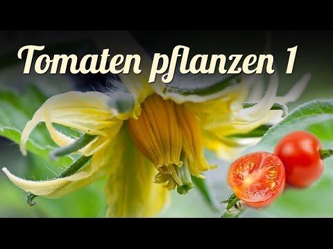 TOMATEN Anpflanzen | Jungpflanzenanzucht | Aussaat Und Pikieren, Tomaten Anbauen, Teil 1 | GARTEN