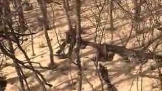 Watch Charlie Hall Psalm 126 video