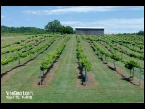 Tennessee Vineyard For Sale, Home For Sale, and Land For Sale - Wine Real Estate - Auction Video