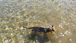 Diego goes for his first swim at the beach