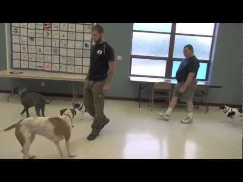 True Dog Aggression Rehabilitation - Dog Training video