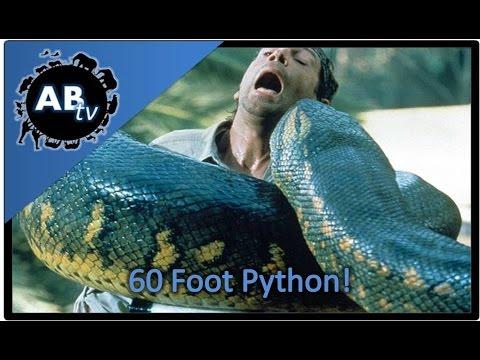 60 Foot Python!!!! SnakeBytesTV : AnimalBytesTV