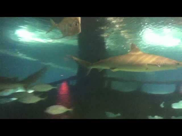 Greater Cleveland Aquarium Walk-thru