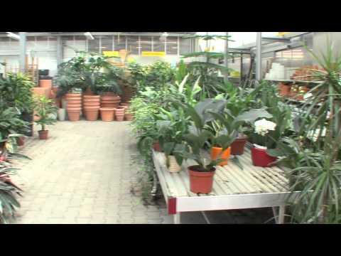1A.TV - Blumen Schneebeli AG, Affoltern (Video)
