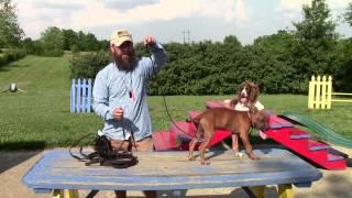 Stonnie Dennis Dog Training