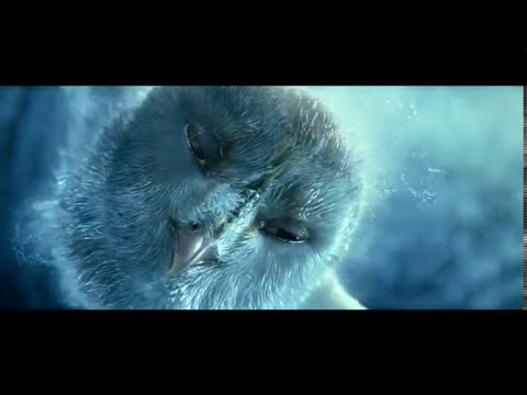 Le Royaume de Ga'hoole / Owls of Ga'hoole Fireflies Owl City