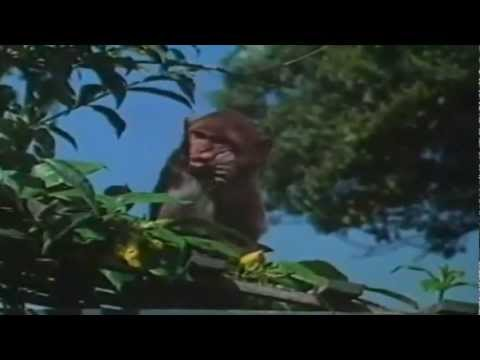 Dil Vil Pyar Vyar [Full Video Song] (HD) With Lyrics - Shagird