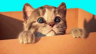 FUNNY CAT Playing With Toys Will Make Baby Laugh - REAL CAT Cartoon Games
