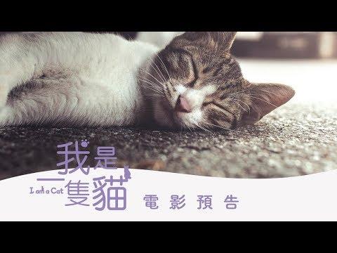 【我是一隻貓】(I am a cat) 台日韓三國街貓日記 愛喵族必看 預告~即將上映