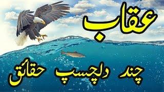 Download Eagle Facts Urdu Hindi Uqaab Ke Bare Mein Dilchasp Haqaiq 3Gp Mp4