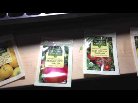 How to start growing hydroponics from seeds with rockwool cubes