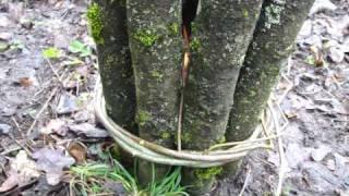bushcraft skills: the swedish torch/stove - my way