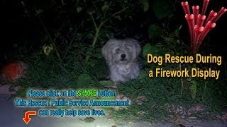 A frightened homeless dog gets rescued during a firework display - Please share.