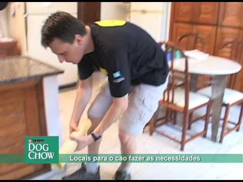 Locais para o cão fazer as suas necessidades