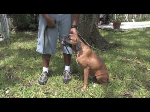 0 Dog Training Tips : How to Teach a Dog to Shake Hands