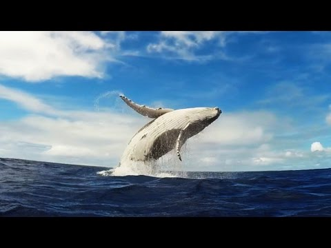 Bálnák - Whales