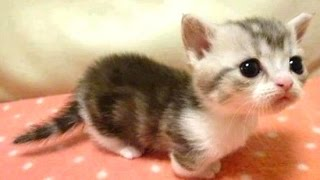 Baby Animals - A Cute Animal Videos Compilation || NEW HD