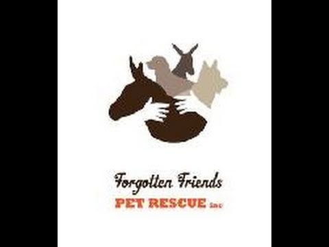 Forgotten Friends Pet Rescue Story