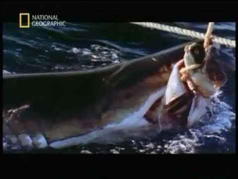 Animali Assassini-Lo squalo bianco 5/5