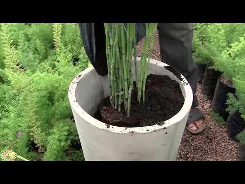 Jardín Urbano - Plantar en macetas