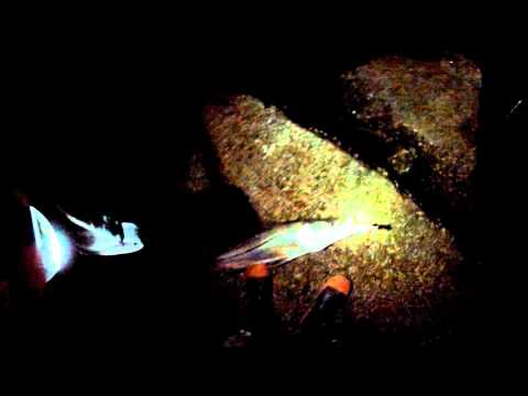 Snook fishing at Sebastian inlet at night