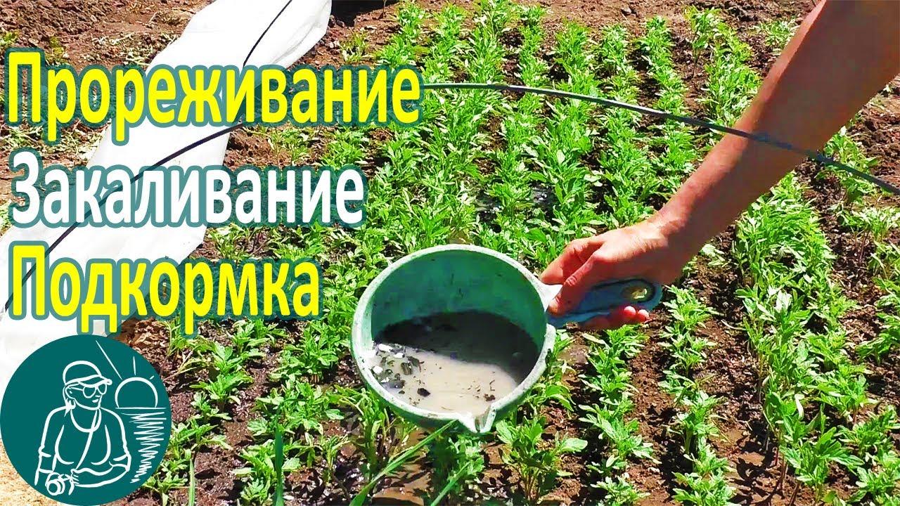 Народные подкормки для рассады томатов 296