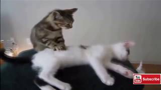 Funny Cat - Try Not To Laugh | Top Funny Cats Videos (2019)