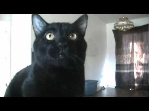 Youtube Go Kitty Cat