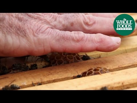 Helping the Honeybees: What can YOU do? | WEG | Whole Foods Market