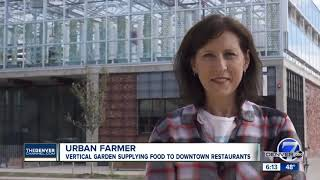 High-tech urban greenhouse takes local farming to a new level in Denver
