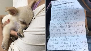 Owner Abandons Abused Puppy in Airport Bathroom with Heartbreaking Note